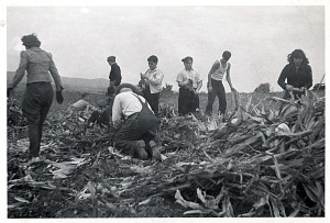 Genetti family farm